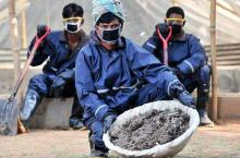 Pit latrine workers in Bangladesh collecting and transporting human waste to a site where it is processed into fertiliser.
