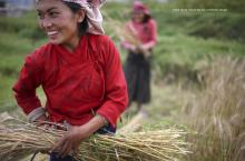 Women working in rural Asia