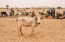 Sahel region, Burkina Faso. Photo: IRC