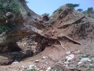 Upturned tree caused by flooding in Ethiopia