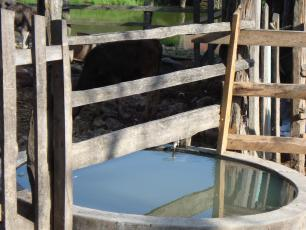 water for cows, Honduras