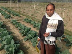 Cabbage beds in Gazipur