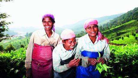 Kerala teapickers
