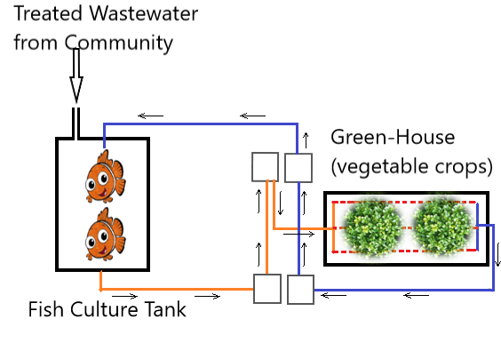 Outline of Aquaponic system for production of vegetables from treated wastewater
